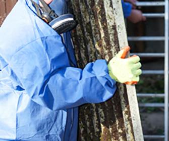 Asbestos Mold Removal